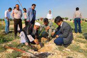 کاشت ۳۰۰ اصله نهال توسط پالایشگاه نهم پارس جنوبی در پارک کردشگری شهر بنک از توابع شهرستان کنگان