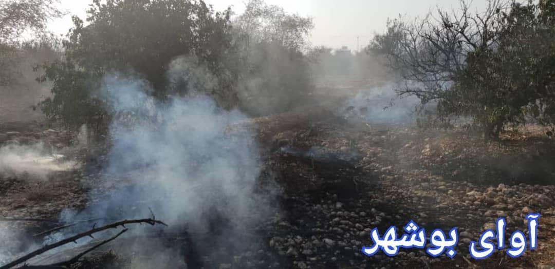 آسیب به ۳۰۰ اصله درخت مرکبات در آتش سوزی روز گذشته جم! + تصاویر