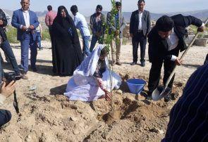 گزارش تصویری کاشت ۱۲۰ اصله درخت توسط زوج جمی