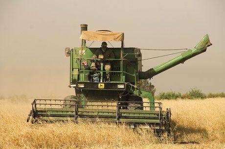 خروج گندم از بوشهر بدون مجوز ممنوع است