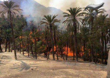 خاکستر شدن باغ های خانیچه جم در سایه ناهماهنگی در مدیریت بحران/ تاخیر ۶ ساعته آتش نشانی برای اعزام به محل!